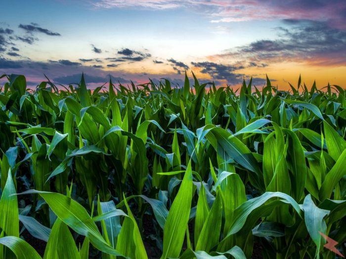 8000 га земли сельхозназначения,  Тамбов
